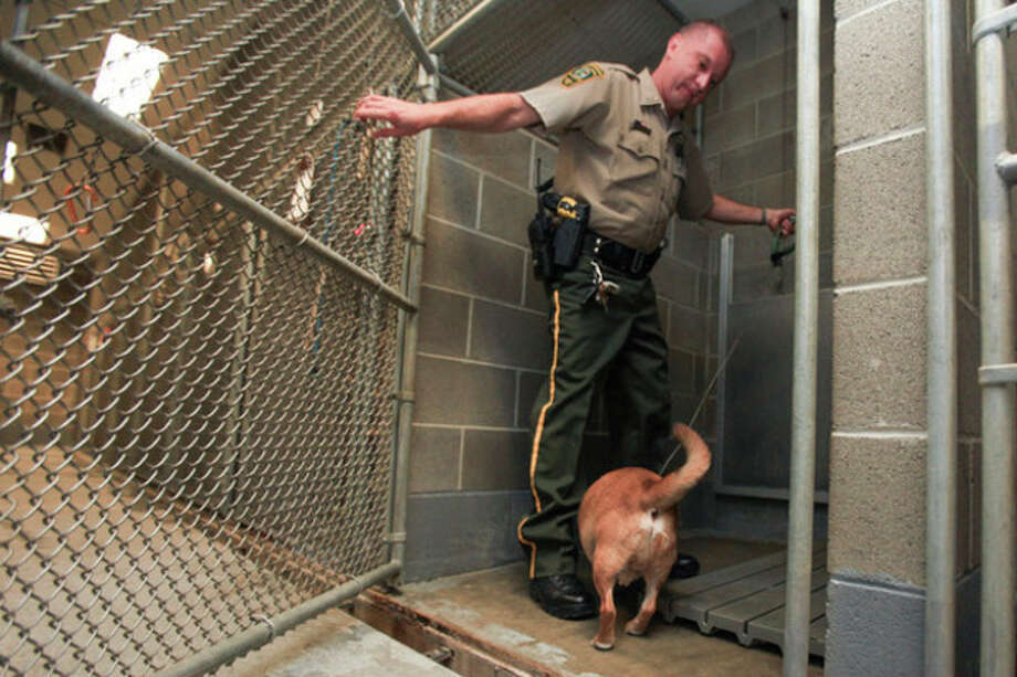 Hour Photo / Chris PalermoAssistant Dog Warden Bob Sirico leads a stray puggle into a pen at the Norwalk Animal Shelter Tuesday. / © 2013 Hour Newspapers All Rights Reserved