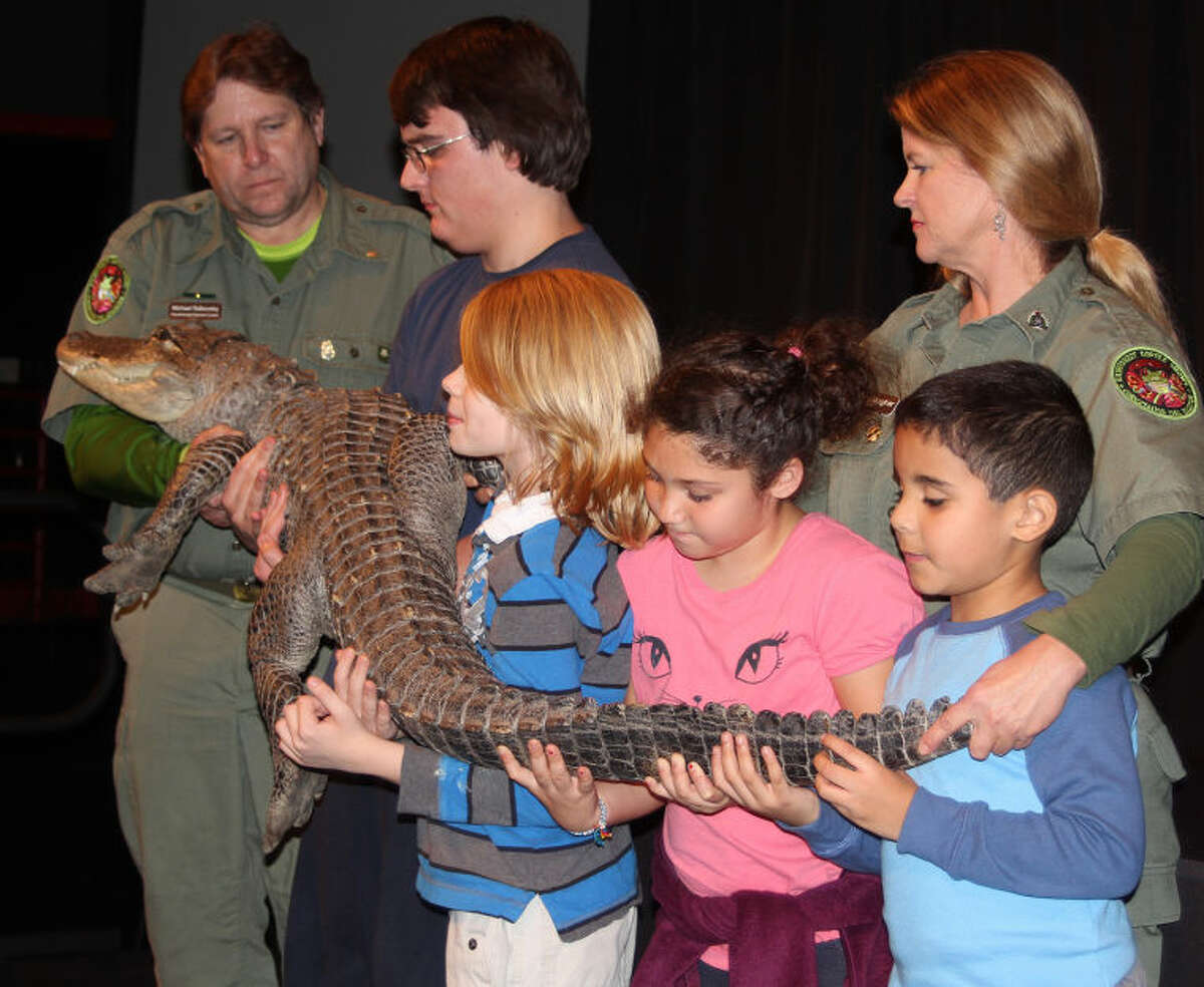 Hour photo / Chris Bosak Professional reptile handlers and young volunteers hold an American alligator as television host, biologist and conservationist Jeff Corwin talks to the crowd during Corwin's program at the Maritime Aquarium at Norwalk on Wednesday afternoon.