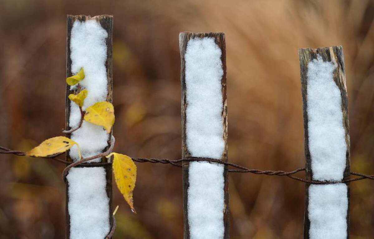 Hour Photo/Alex von Kleydorff. A dusting of snow sticks to a wooden fence along a sand dune as a vine with a last few yellow leaves twists around it at Sherwood Island State Park on Tuesday
