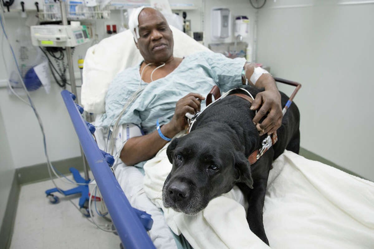 Cecil Williams pets his guide dog Orlando in his hospital bed following a fall onto subway tracks from the platform, Tuesday, Dec. 17, 2013, in New York. The blind 61-year-old Williams says he fainted while holding onto his black labrador who tried to save him from falling. (AP Photo/John Minchillo)