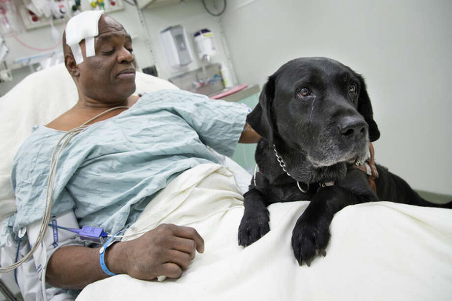 Cecil Williams pets his guide dog Orlando in his hospital bed following a fall onto subway tracks from the platform at 145th Street, Tuesday, Dec. 17, 2013, in New York. Williams, 61 and blind, says he fainted while holding onto his black labrador who tried to save him from falling. (AP Photo/John Minchillo) / FR170537 AP