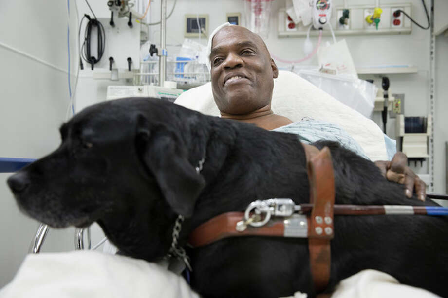 Cecil Williams smiles as he pets his guide dog Orlando in his hospital bed following a fall onto subway tracks from the platform at 145th Street, Tuesday, Dec. 17, 2013, in New York. The blind 61-year-old Williams says he fainted while holding onto his black labrador who tried to save him from falling. Both escaped without serious injury. (AP Photo/John Minchillo) / FR170537 AP