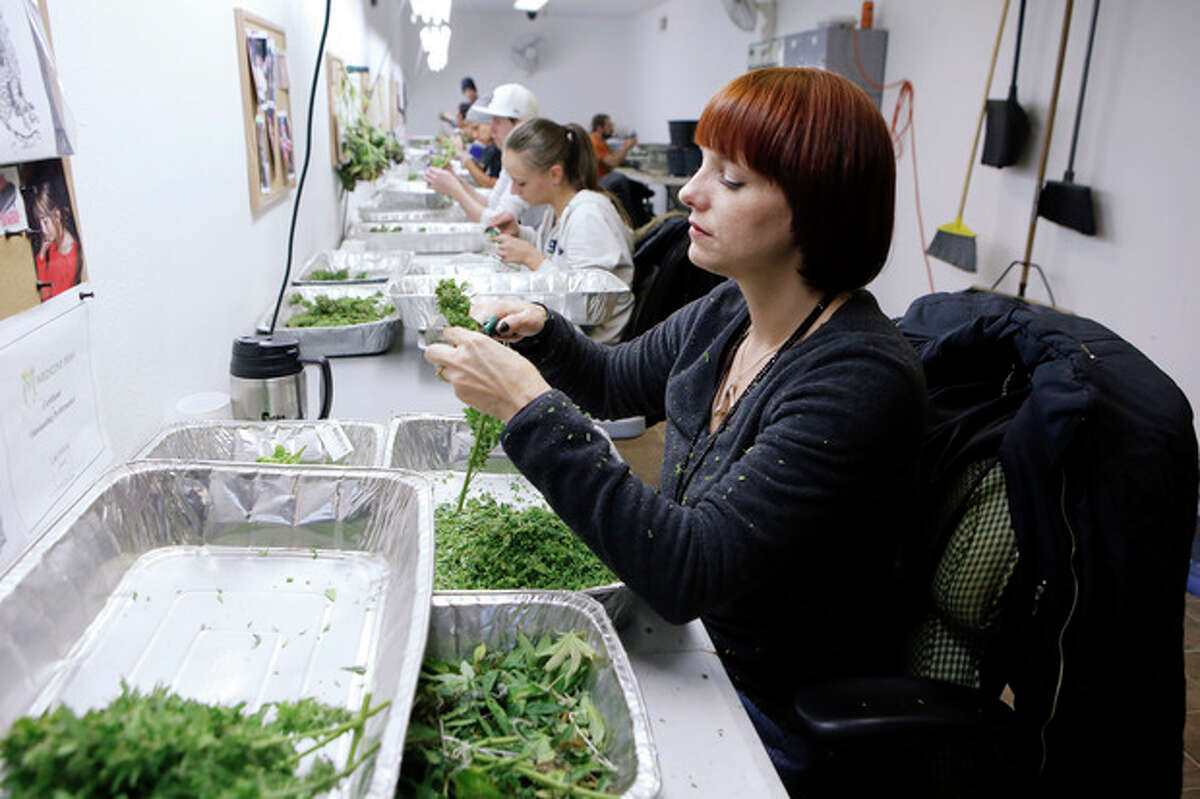 In this Dec. 5, 2013 photo, workers process marijuana in the trimming room at the Medicine Man dispensary and grow operation in northeast Denver. Colorado prepares to be the first in the nation to allow recreational pot sales, opening Jan. 1. (AP Photo/Ed Andrieski)