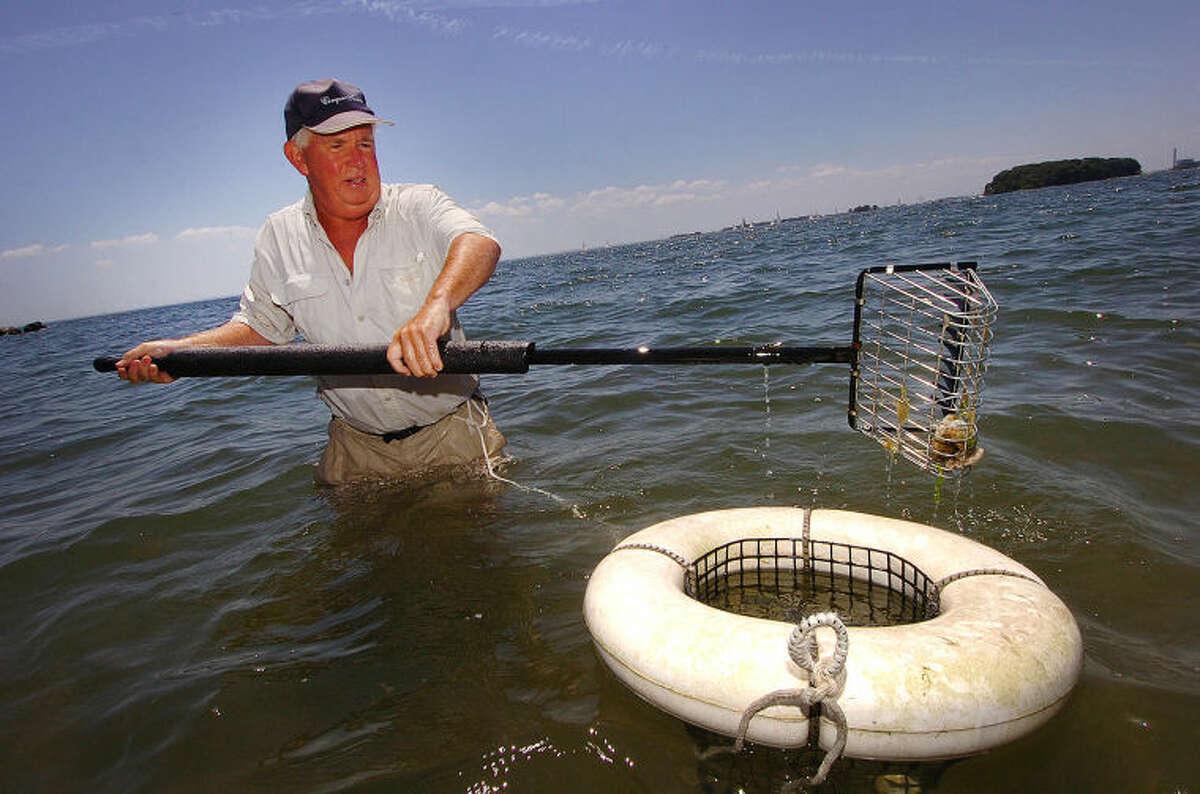 Hour Photo/Alex von Kleydorff. 2011 file photo, Bill Armstrong shellfishing off Canal Beach in Westport.