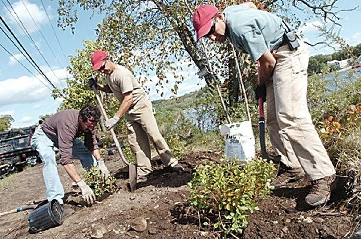 Kevin Clark, Joe Gloria and Tom Gilbertie from Gilberties Herb Gardens planting at Pasacreta Park in Westport Wednesday where residents and officials helped clean and renew the area/hour photo matthew vinci