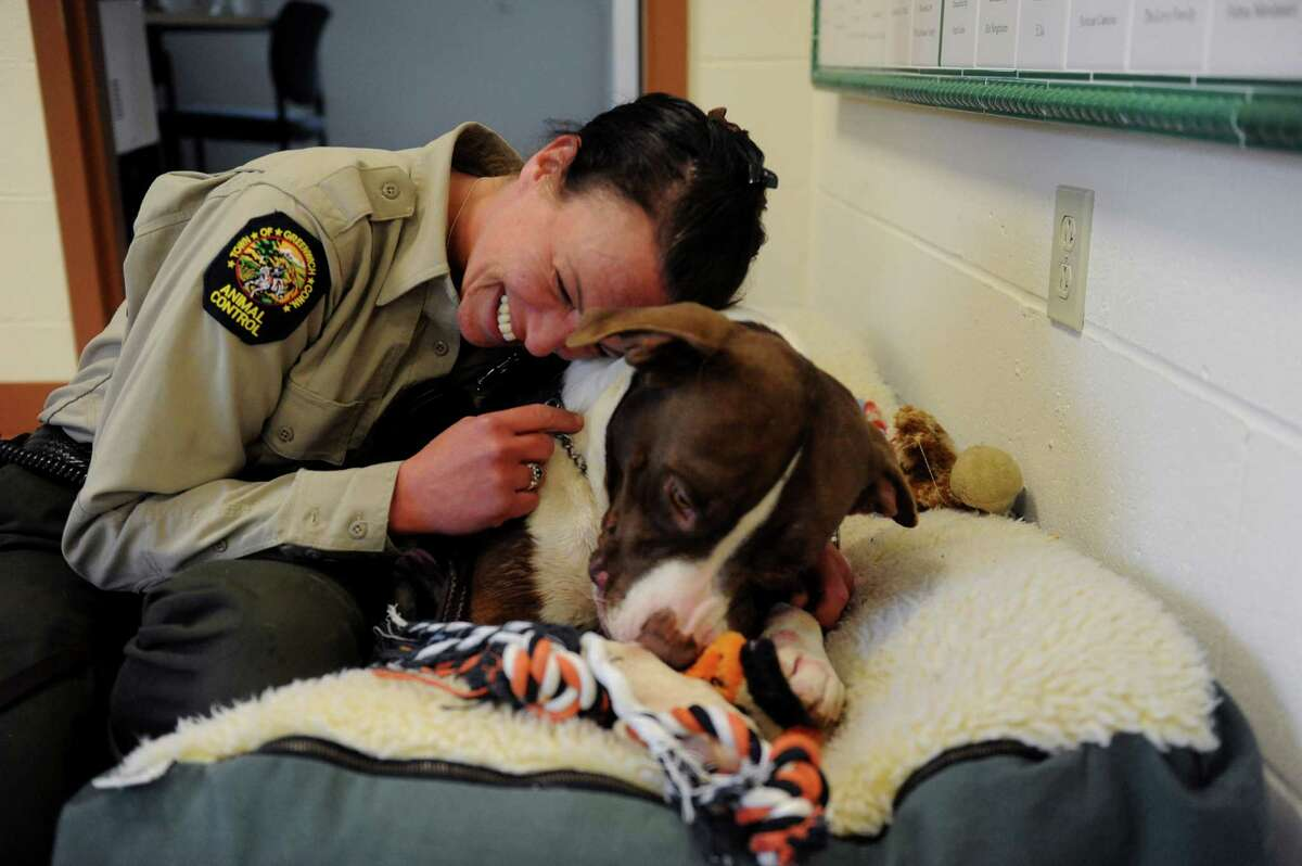 Greenwich animal control officer Stacy Rameor with Howard, a pit bull and a shelter dog, who has had his rabies vaccination. The Connecticut Veterinary Medical Association is sponsoring a low-cost rabies vaccination clinic on Saturday from 10 a.m.-noon at Greenwich Animal Control, 393 North St.