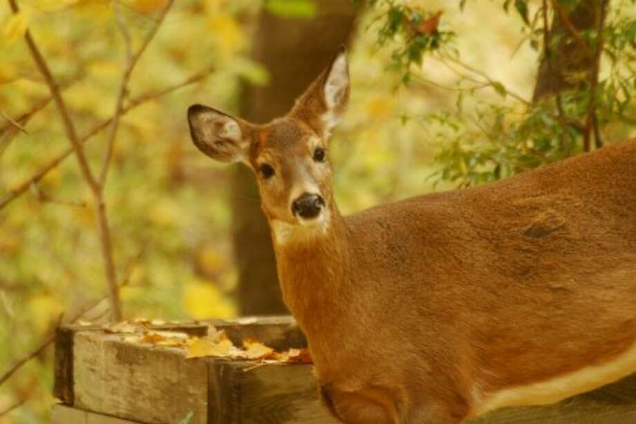 The natural allure of deer