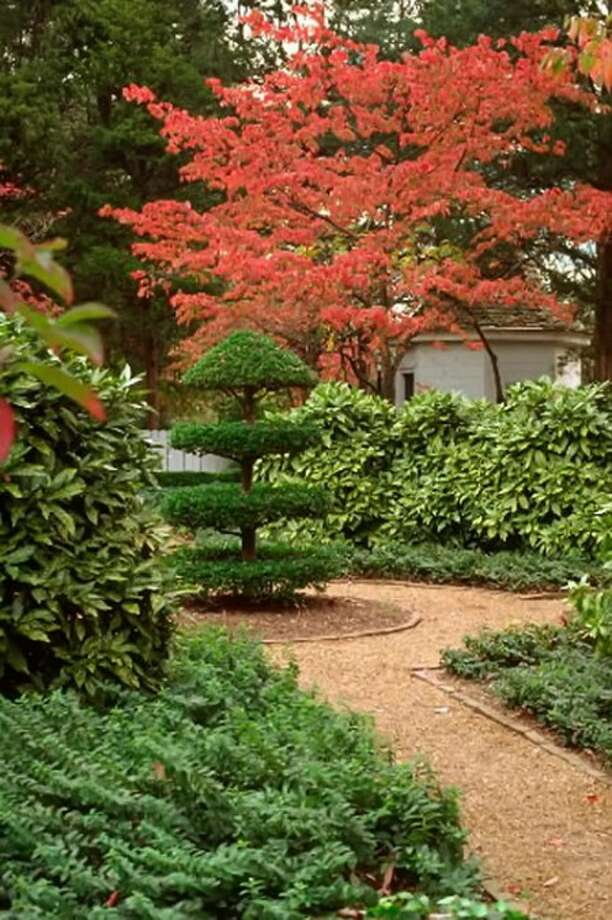 Dogwood''s leaves turn scarlet red in the fall. (Courtesy Colonial Williamsburg via Newport News Daily Press/MCT)