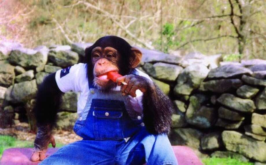 2007 File Photo. Travis the Chimp