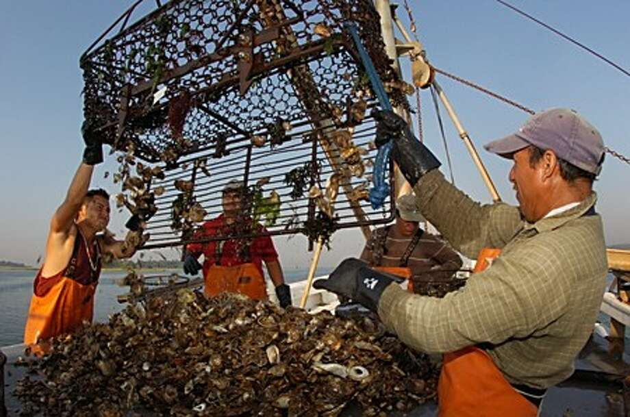 Oystermen with Hillard Bloom and Sons harvest oysters on Long Islnad Sound Tuesday morning. Hour photo / Erik Trautmann