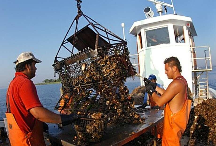 Fisherman with Hillard Bloom Shellfish Inc. bring a load aboard the Eben A Thacher Tuesday morning. Hour photo / Erik Trautmann