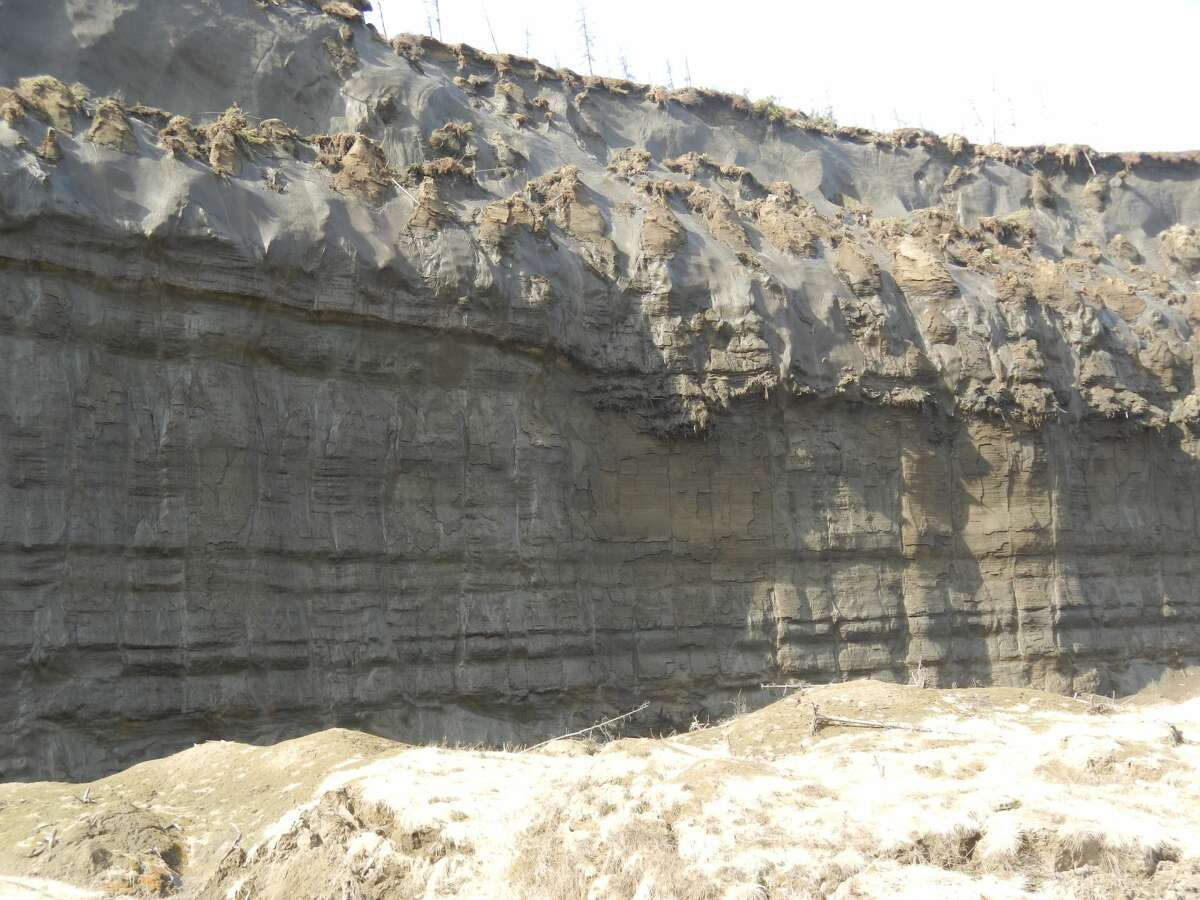 Fossil forest bed (in center) above ancient eroded land surface in the wall of the Batagaika crater in Siberia.