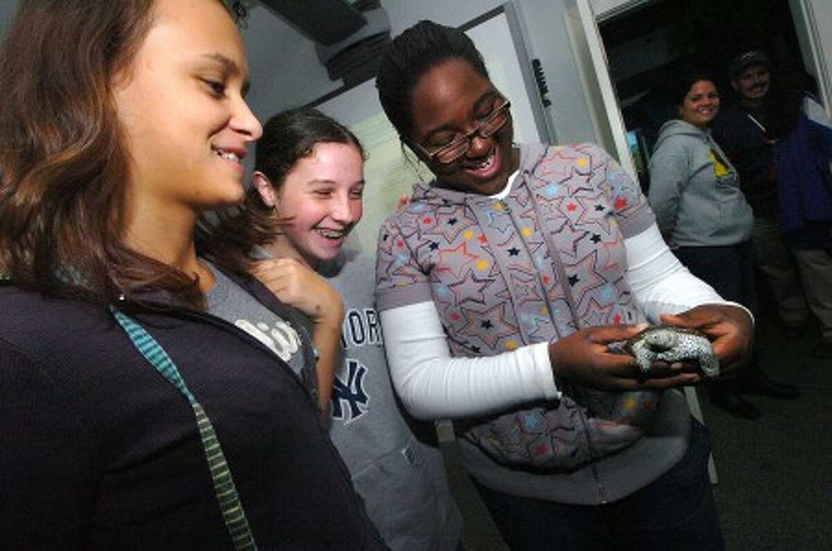 Photo/Alex von Kleydorff. l-r 9th graders Enesa Palavrtic, Eleni Burchard and Jael Francois spend a moment with a male Diamondback Terrapin turtle during a program at Soundwaters.