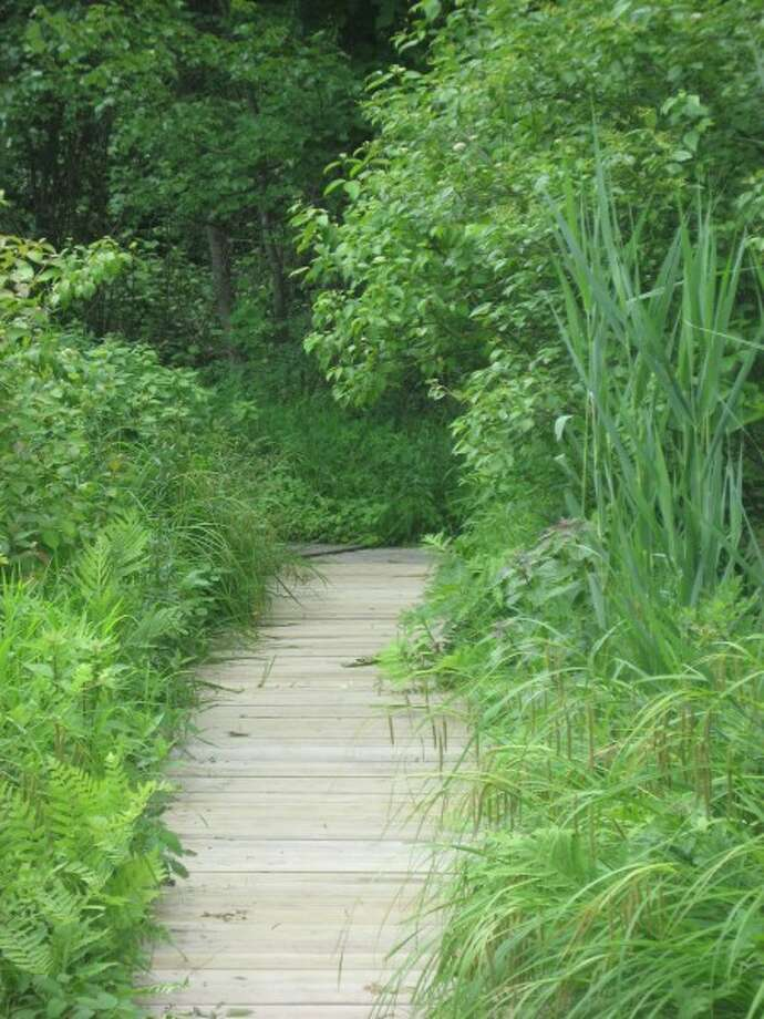 A boardwalk leads through the greenery at New Canaan Nature Center. (photo/Nicole Stieglitz)