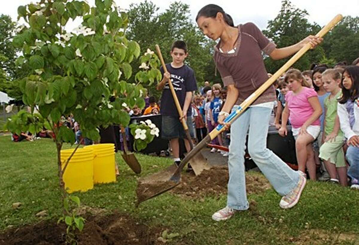 Wolfpit Elementary School 5th grader Karina Soto, who read the most books in her class, takes part in a tree planting ceremony Tuesday to commemorate the schools goal of over three thousand books read as part of this year''s reading initiative, Braching Out with Books. Hour photo / Erik Trautmann