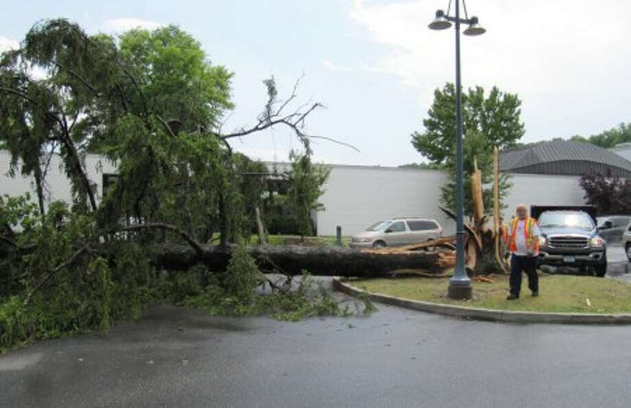 Thursday''s storm burst knocked down a tree in front of the Wilton Library.