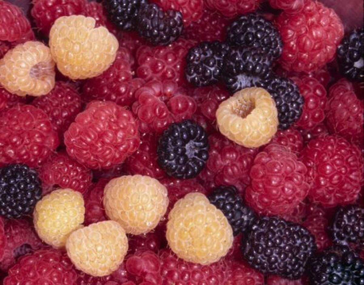 No fruits are tastier or more fragile and perishable than perfectly ripe raspberries. (AP Photo/Lee Reich)