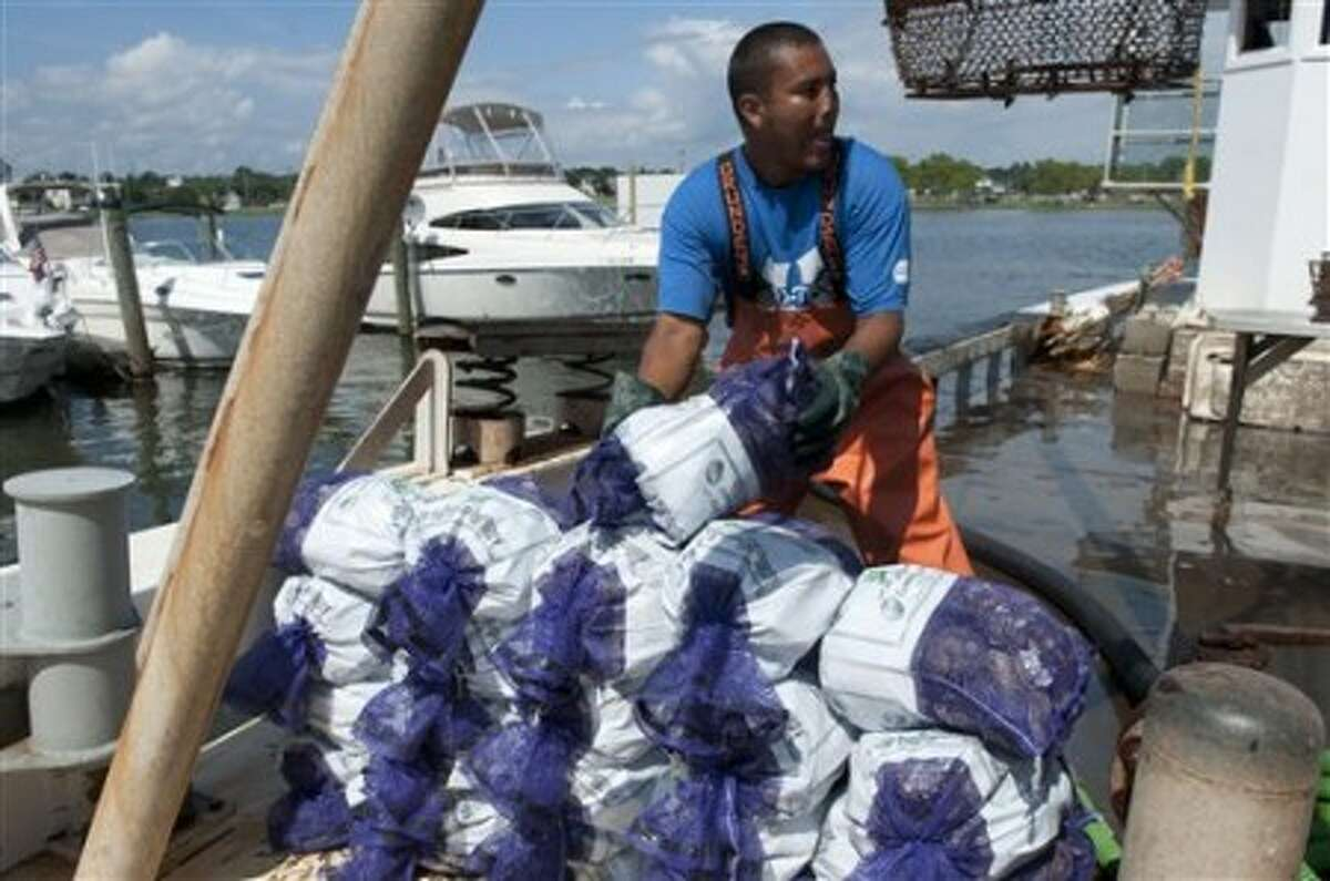In this July 15, 2010 photo, oyster fisherman Carlos Iraheta off-load bags of oysters collected in Long Island Sound to the dock of Hillard Bloom Shellfish in South Norwalk, Conn. Experts say the oil spill in the Gulf of Mexico could mean higher profits and the potential for growth for the shell fisheries in Long Island Sound. (AP Photo/Douglas Healey)