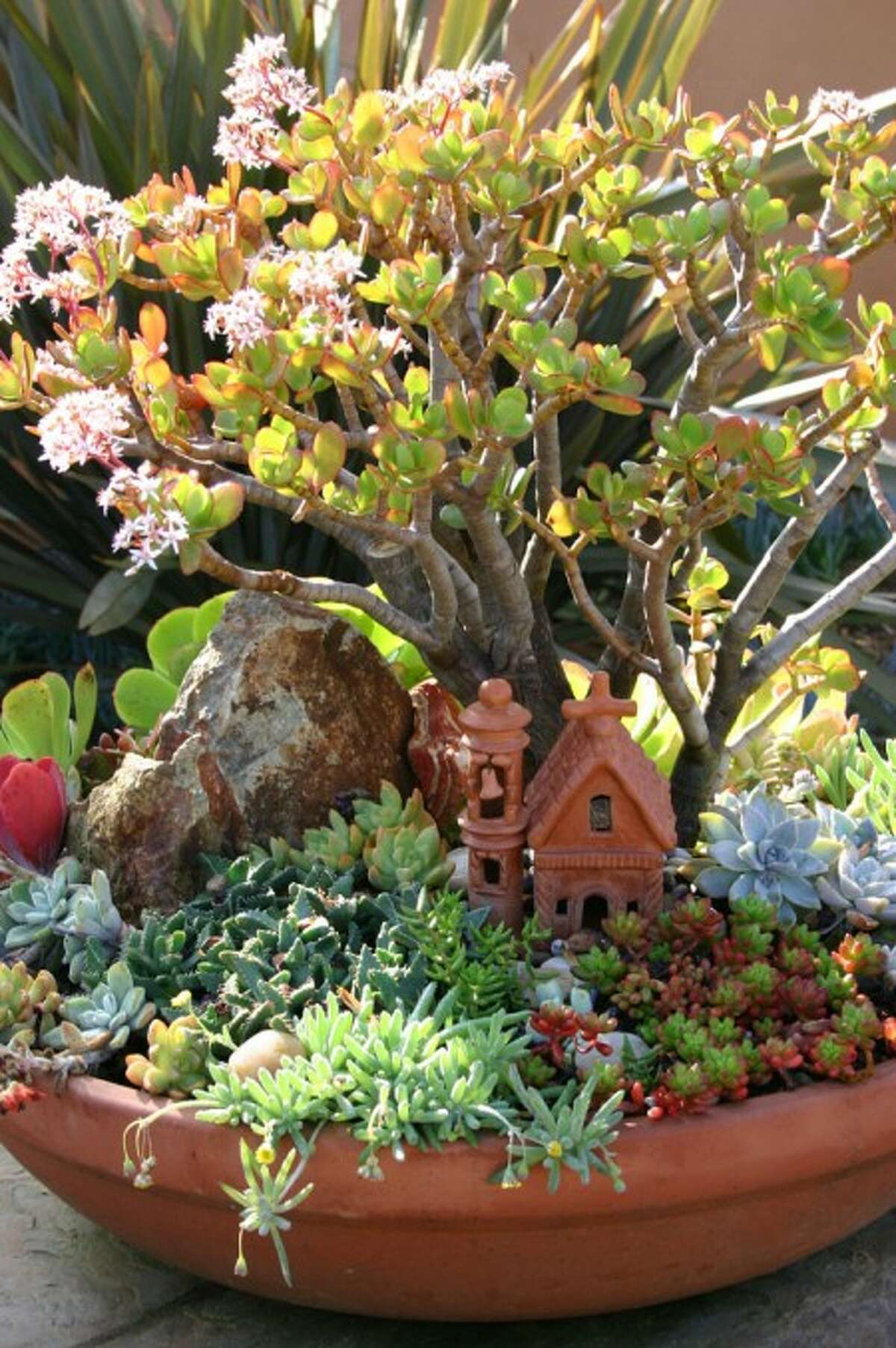 This photo released by Debra Lee Baldwin shows a miniature landscape with a jade plant behind the tiny building is in bloom, sedums and othonna fill the foreground, and a rock with interesting striations suggests a mountain. Design by Suzy Schaefer. (AP Photo/Debra Lee Baldwin)**NO SALES**