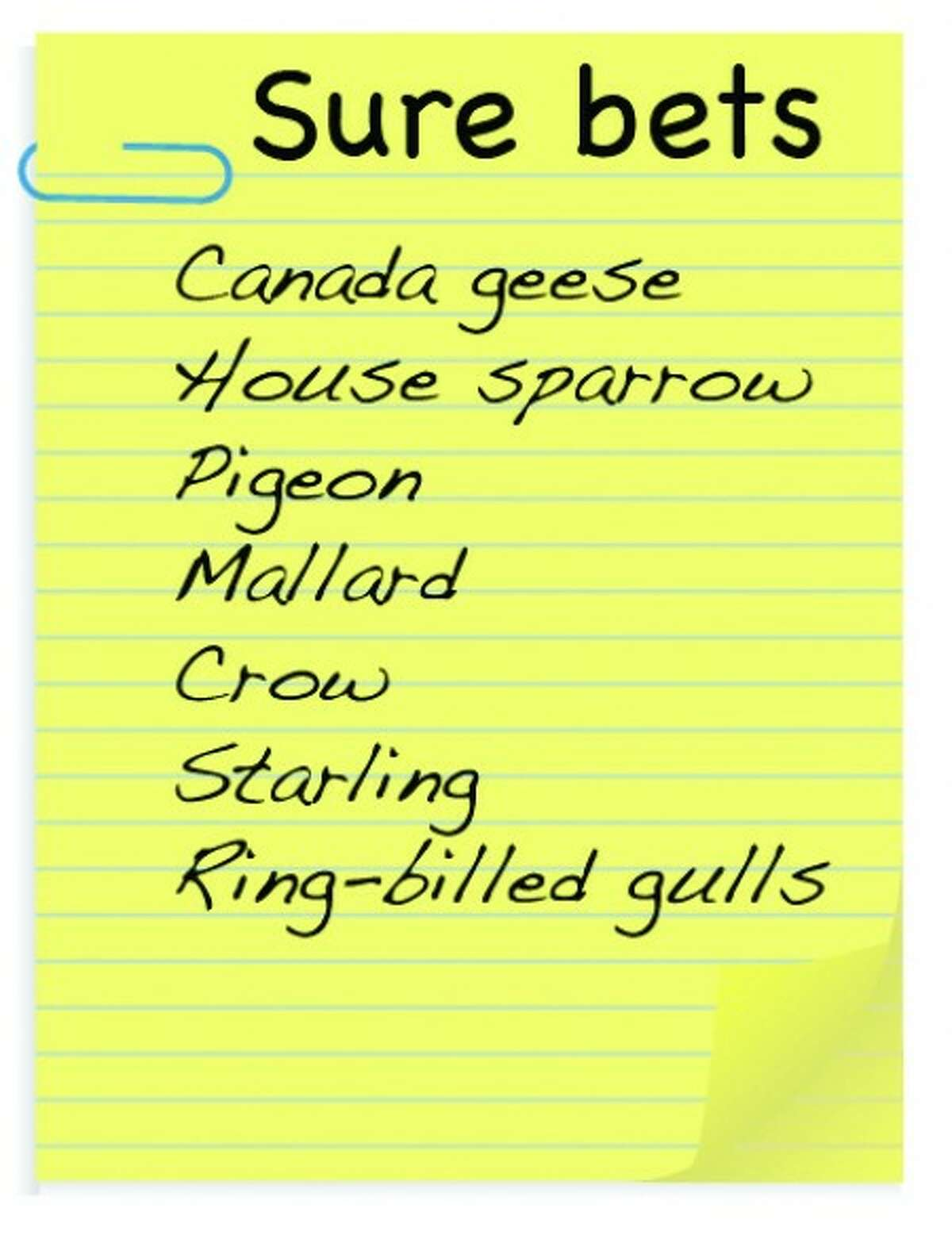 A wish list for the Christmas Bird Count.