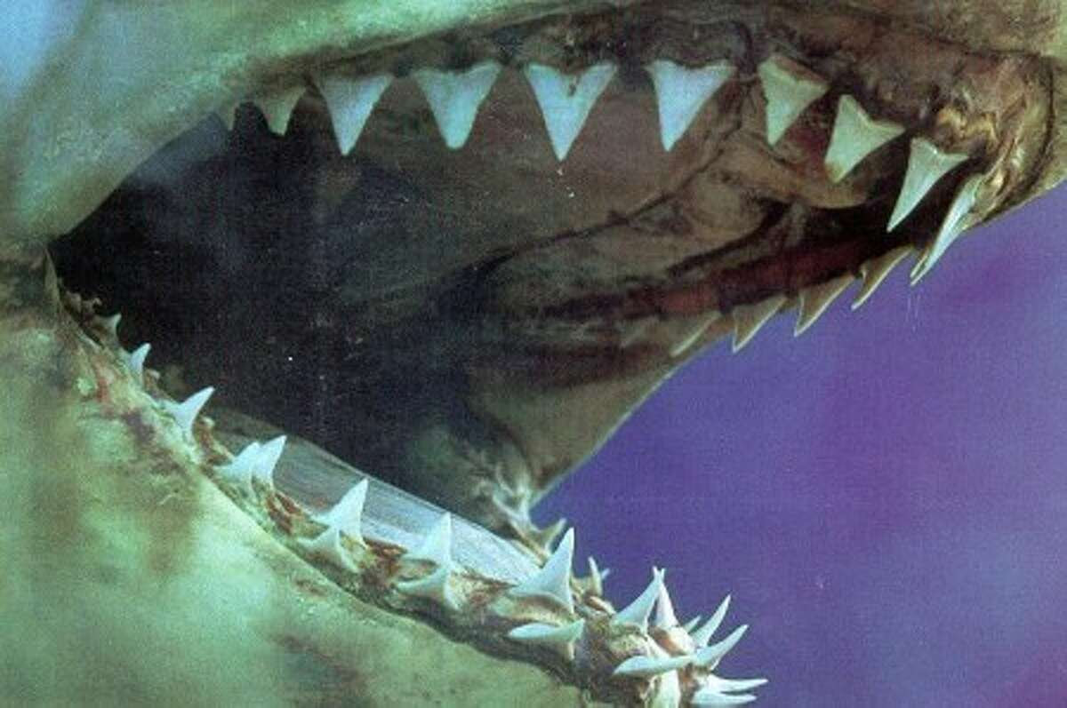 Wilton library double feature marks 'Jaws' 35th anniversary