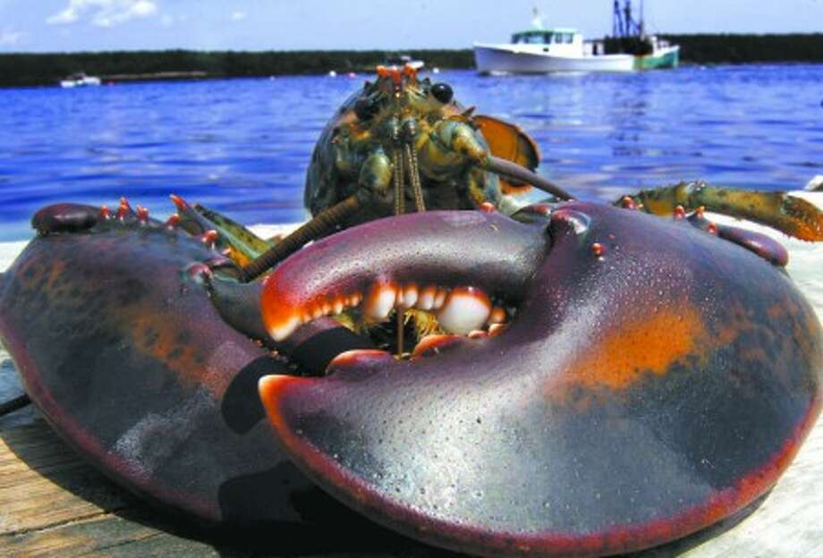 A freshly caught Maine lobster on the wharf at Cundy''s Harbor, Maine. (AP Photo/Pat Wellenbach, File)
