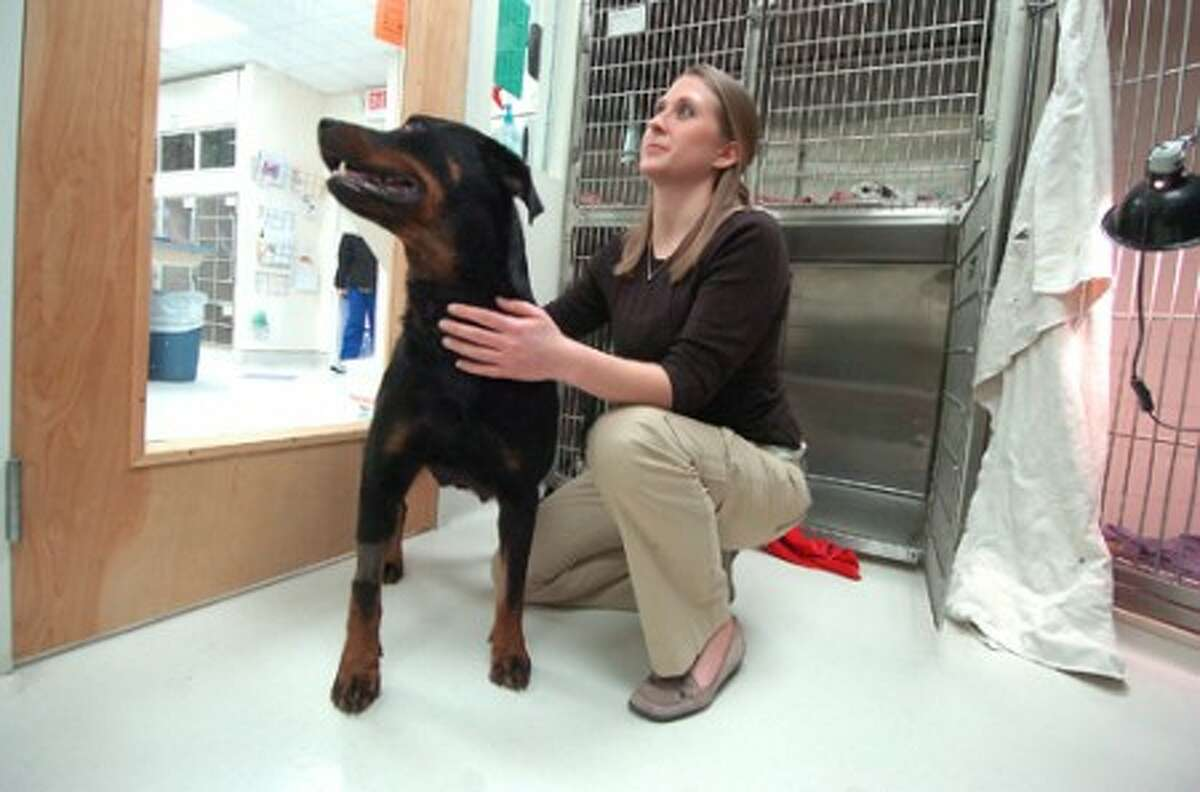 Photo/Alex von Kleydorff. Volunteer vet student Liz Anilionis spends some time with the puppies mother April at South Wilton Vetrinary Group.