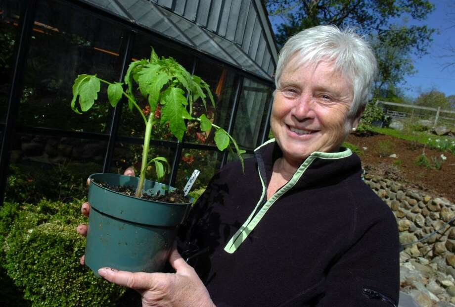 Dr. Candace Benyei, president of the Fairfield County Farm Bureau, holds a young tomato plant at her Redding, Conn. home April 23rd, 2010. Photo: Ned Gerard / Connecticut Post
