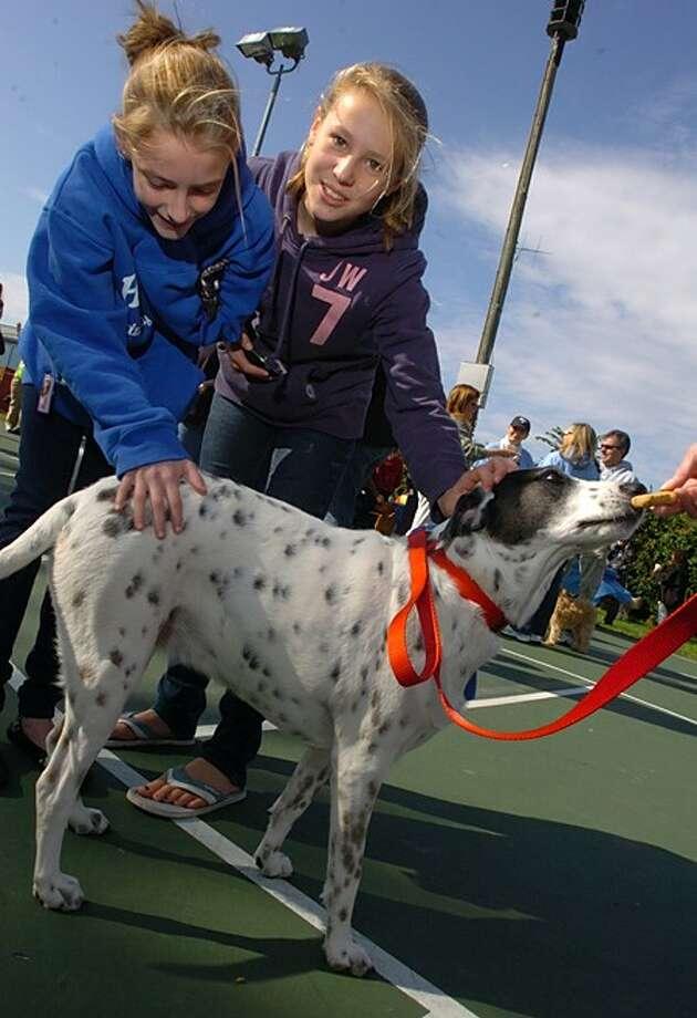 """Isabelle Proctor and Samantha McStocker pet """"Westport''s Top Dog"""", Sarah, at the Westport Animal Shelter Advocate''s"""