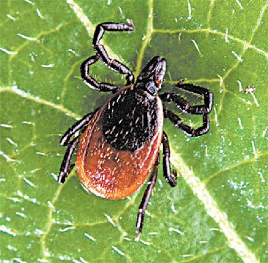 Officials: Lyme disease is a 'very serious issue' in Wilton