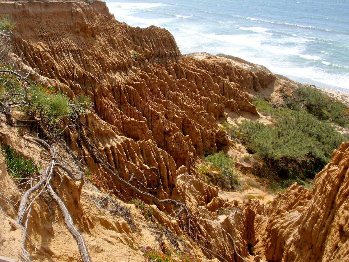 The rugged landscape at Torrey Pines State Nature Reserve.