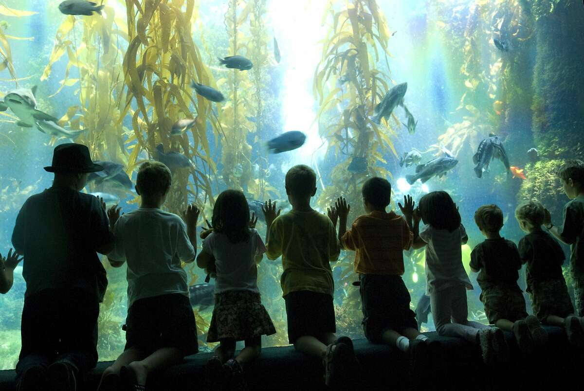 Visitors at the Birch Aquarium.