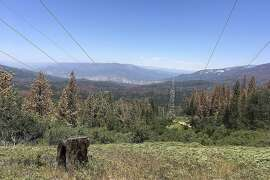 This June 6, 2016 photo shows patches of dead and dying trees near Cressman, Calif. California's drought and a bark beetle epidemic have caused the largest die-off of Sierra Nevada forests in modern history, raising fears that trees could come crashing down on people or fuel catastrophic wildfires, devastating mountain communities and choking the sky with smoke. Officials in California say they�re preparing to use large air-blasting incinerators to burn up trees killed by drought and a beetle epidemic ravaging Sierra Nevada forests.  (AP Photo/Scott Smith)