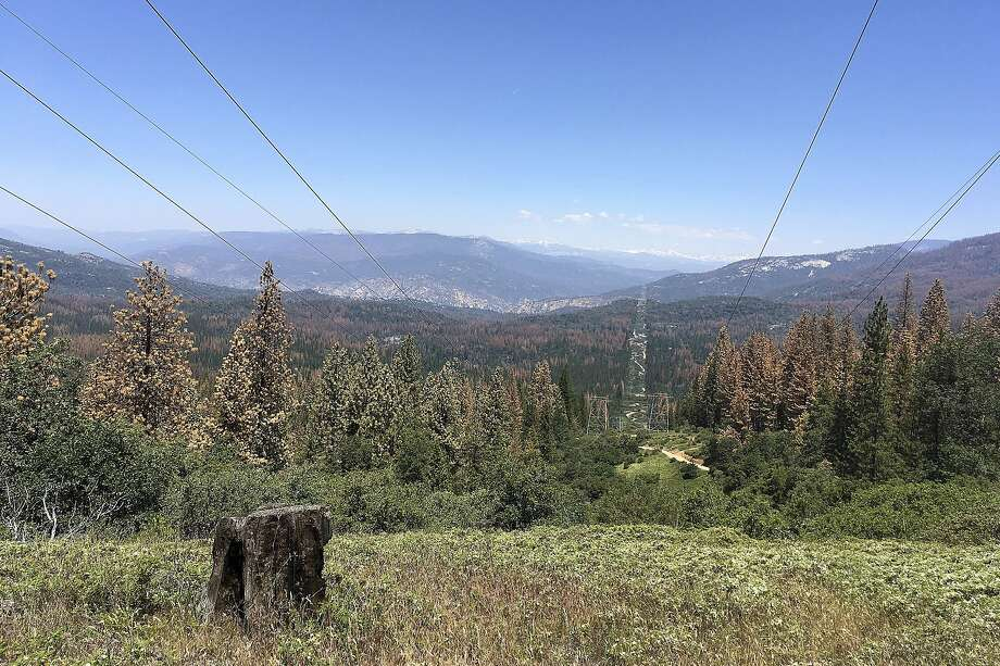 Dead and dying trees in Fresno County in June 2016 reflect the toll of California's drought and bark beetle epidemic on the state's forests. Failure to better manage the forests will impair air and water quality and raise the cost to fight future wildfires. Photo: Scott Smith, Associated Press