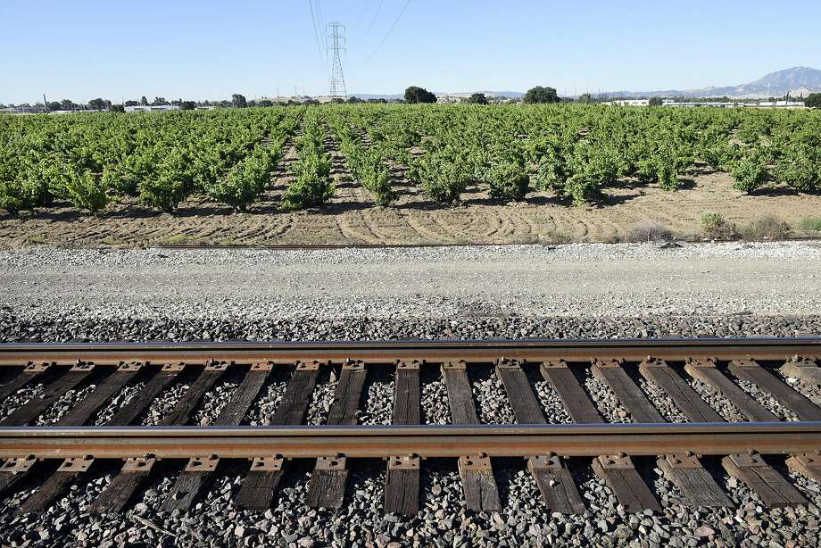 Train tracks at the edge of Evangelho Vineyard in Antioch. Photo: Michael Short, Special To The Chronicle