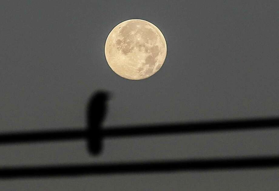 """The """"Strawberry Moon"""" sets Tuesday morning as a bird on an electrical wire is silhouetted in front of it on Tuesday, June 21, 2016, in Houston. According to the Farmer's Almanac the Full Strawberry Moon got its name because the Algonquin tribes knew it as a signal to gather ripening fruit. It was often known as the Full Rose Moon in Europe and the Honey Moon. Photo: Elizabeth Conley, Houston Chronicle / © 2016 Houston Chronicle"""