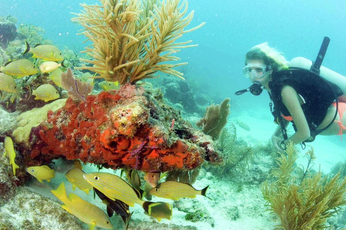A diver explores the coral reef in Key Largo, Fla. Corals participate in rites of mass spawning. Timing of these rites are hard to predict because the corals shed their sex cells in sync, or the success of reproduction decreases.