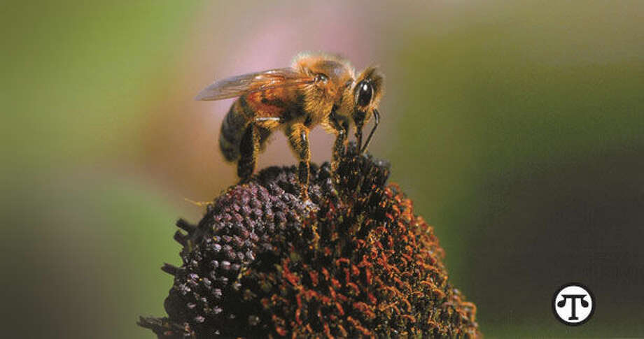 "For the environment's sake, ""bee"" prepared to provide a friendly habitat for bees and other pollinators. (NAPS)"