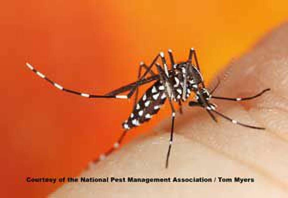 Mosquitoes are often seen as one of the deadliest animals on the planet. Photo: Thomas V. Myers
