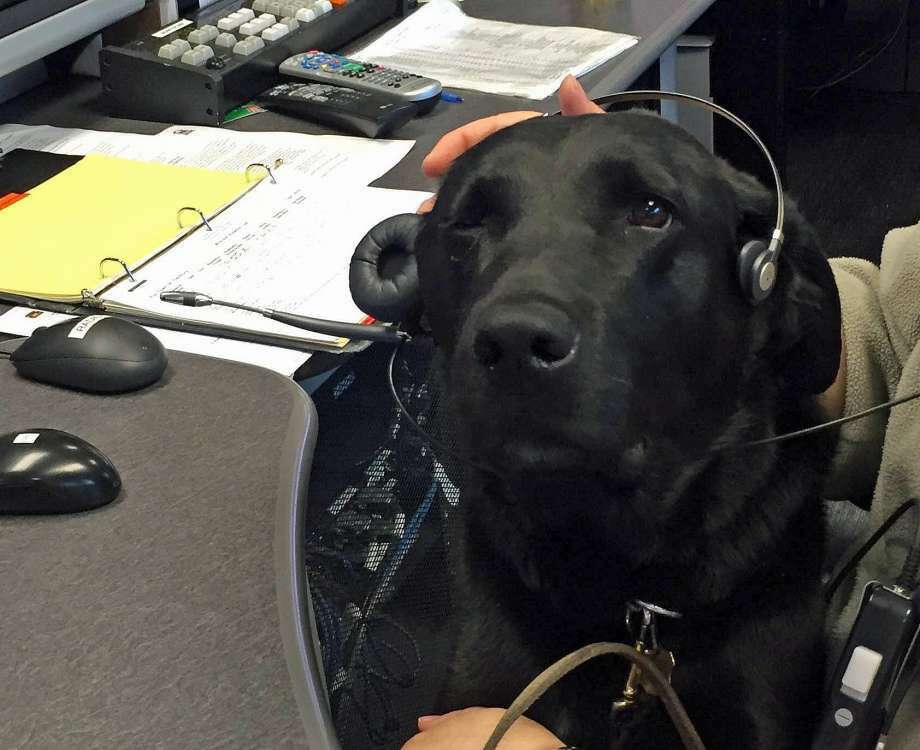 """On its Facebook page, State Police posted this photo K9 Favor wearing a headset at Troop A barracks in Southbury. """"Nose, eyes or ears K9 Favor is there for you! K9 Favor was nice enough to give the dispatchers at Troop A-Southbury a quick break."""" (Photo: State Police Via Facebook)"""