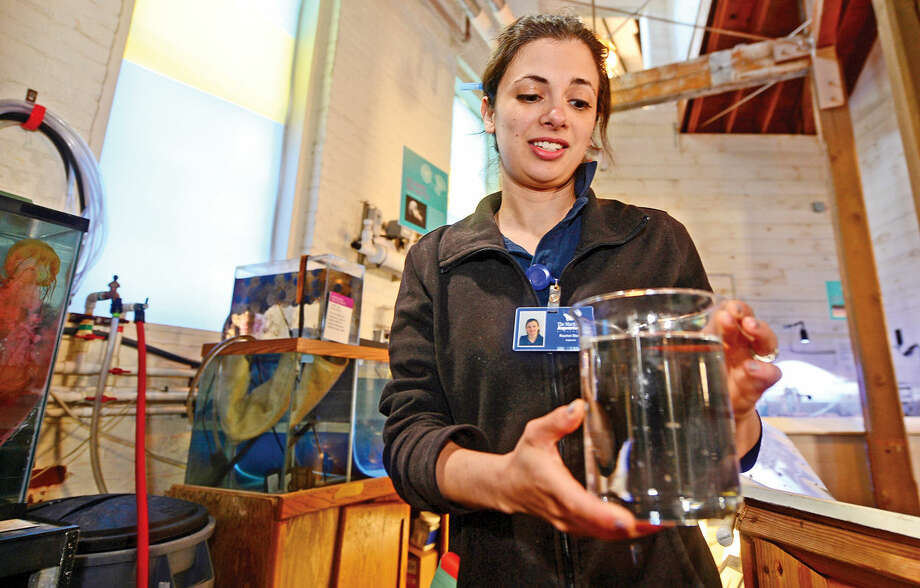 Aquarist Rachel Stein heads up The Maritime Aquarium jellyfish growing operation in Norwalk, Conn. on Tuesday June 14, 2016. The prolific operation distributes jellyfish to other aquariums across the country. Photo: Erik Trautmann