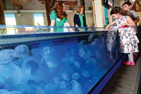 Lucy and Jonah Lotstein, 5 and 8, touch Moon Jellyfish in a touch tank at The Maritime Aquarium in Norwalk, Conn. while aquarium volunteers Maureen Twomly and Anne Berlack look on Tuesday June 14, 2016. The Maritime Aquarium 's jellyfish growing operation distributes jellyfish to other aquariums across the country.