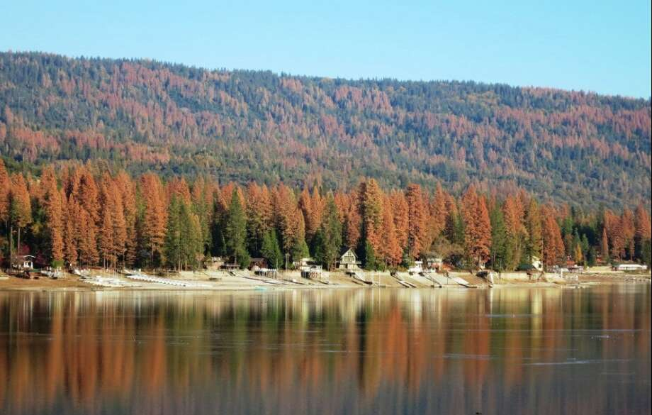 The US Forest Service provided these photos of dead trees in the Sierra National Forest. Photo: USFS