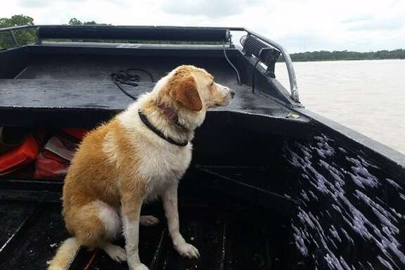 Reporter Phil Archer helped rescue a female  mixed-breed dog during the May flooding.