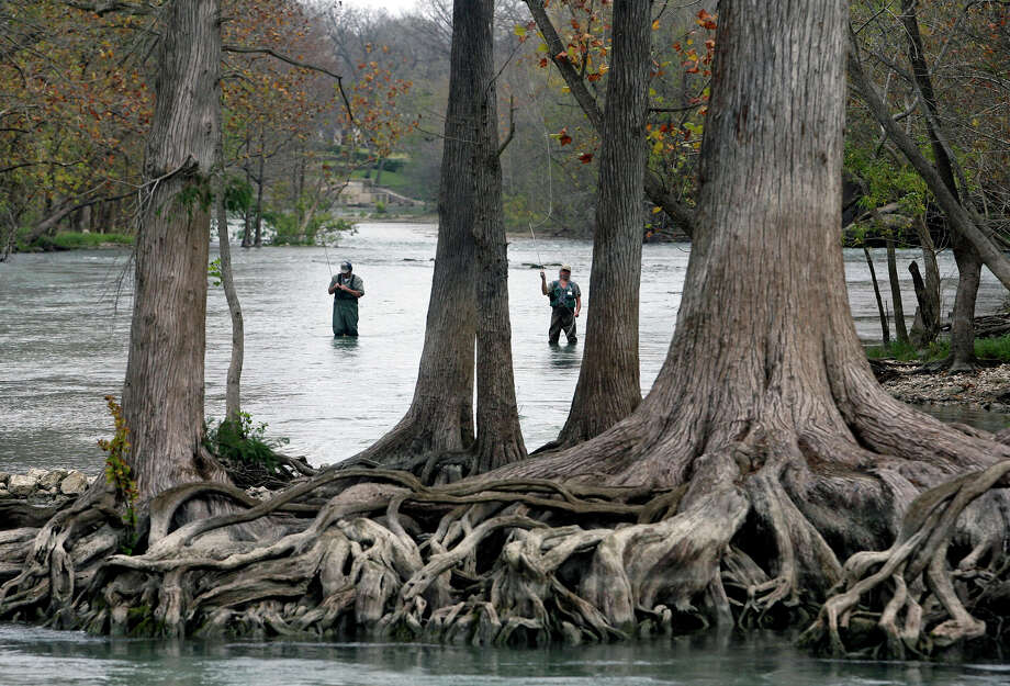 Anglers use fly fishing equipment around some huge cypress trees to land trout released in the Guadalupe River by the Texas Parks & Wildlife Department below Canyon Dam on Dec. 7, 2007. Photo: Tom Reel /San Antonio Express-News / SAN ANTONIO EXPRESS-NEWS