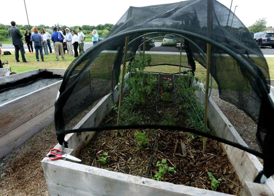 At IDEA Monterrey Park in San Antonio, the charter school has vegetable garden plots and will start a 1.5-acre farm near the school. IDEA network just won a national charter school award. Photo: William Luther /San Antonio Express-News / © 2016 San Antonio Express-News