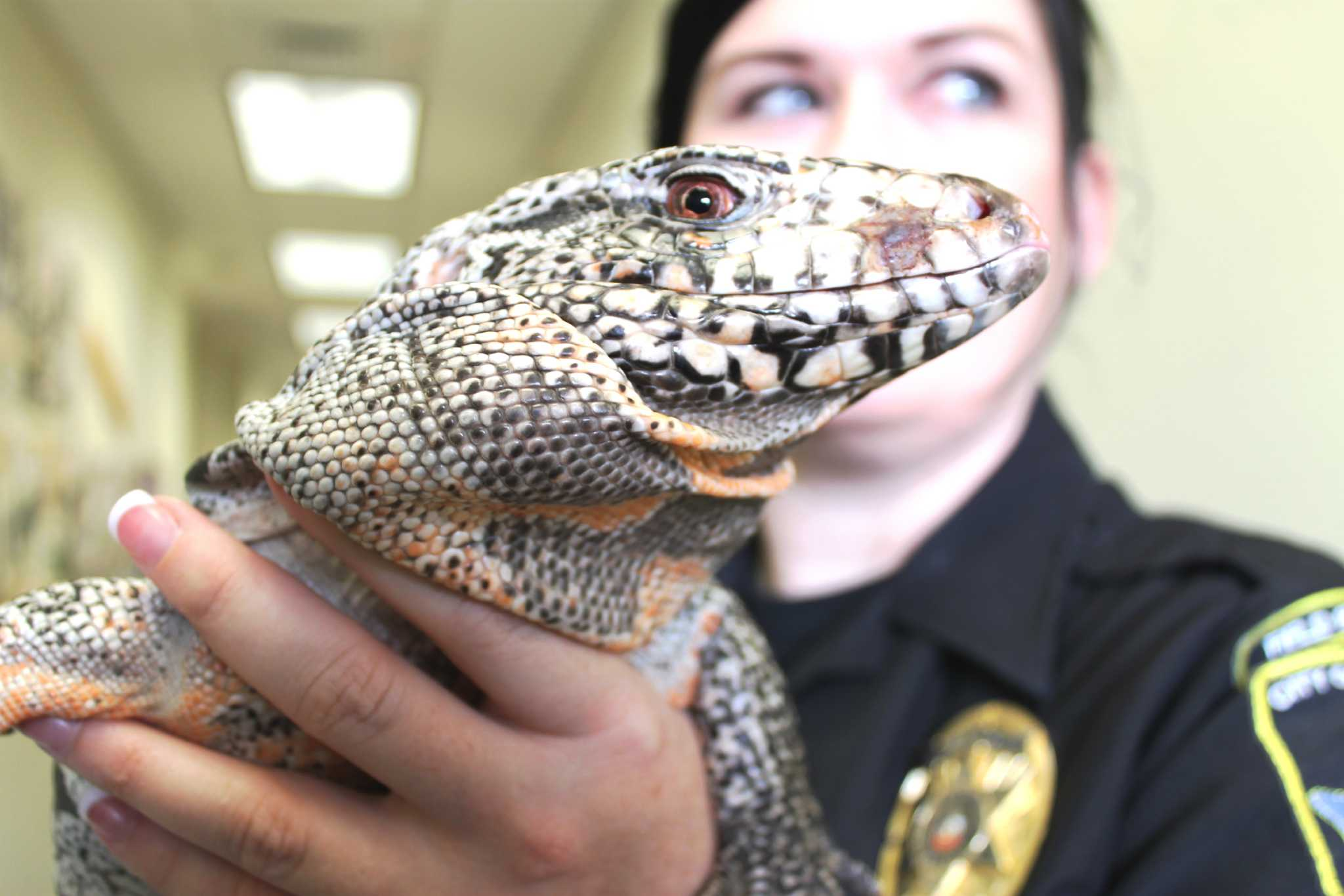 Residents Finds Stray South American Lizard In Northeast