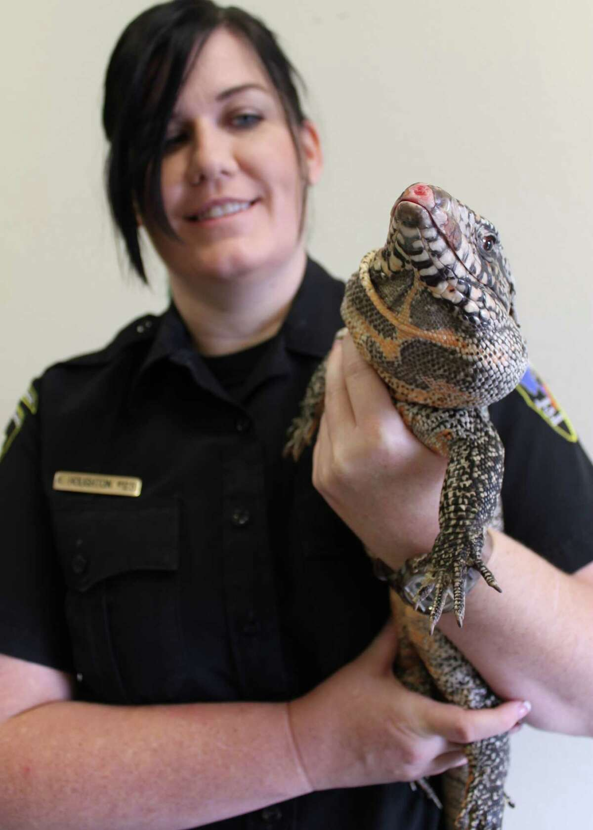 Animal Care Services field operations officer,Audra HoughtonholdsLeandro, a Tegu lizard that a resident found on the porch of his Northeast Side home.