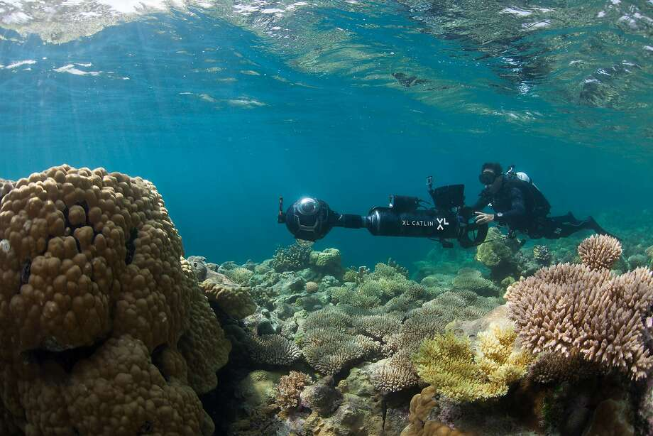 An XL Catlin Seaview Survey diver photographs coral in Hawaii last year. Warmer waters have bleached many reefs. Photo: Associated Press