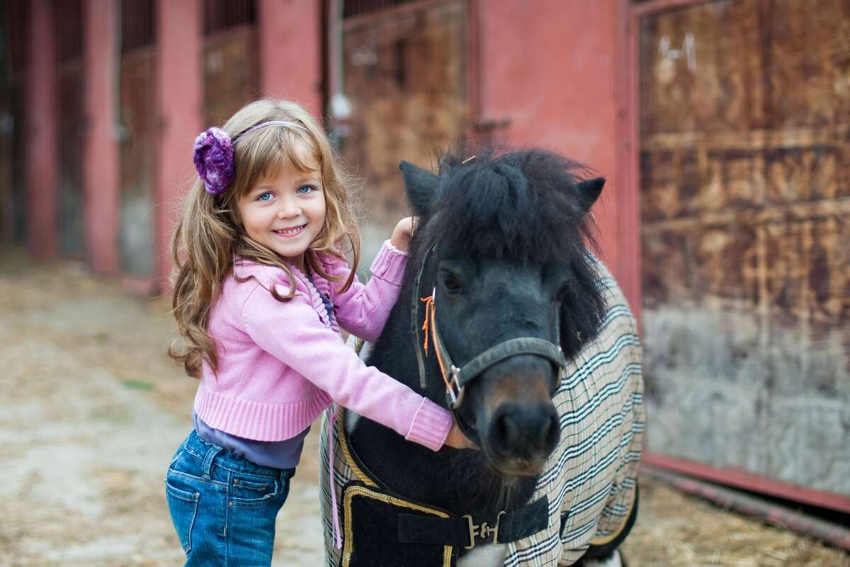 Play with ponies